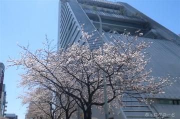 200324sakura01